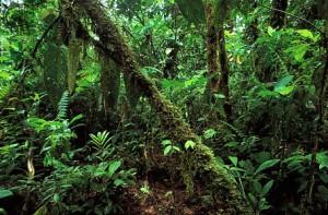 ecuador-rainforest1